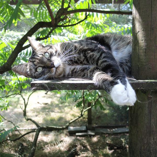 Grijze kat pension voor katten