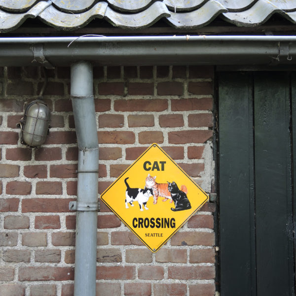 Cat Crossing :-)
