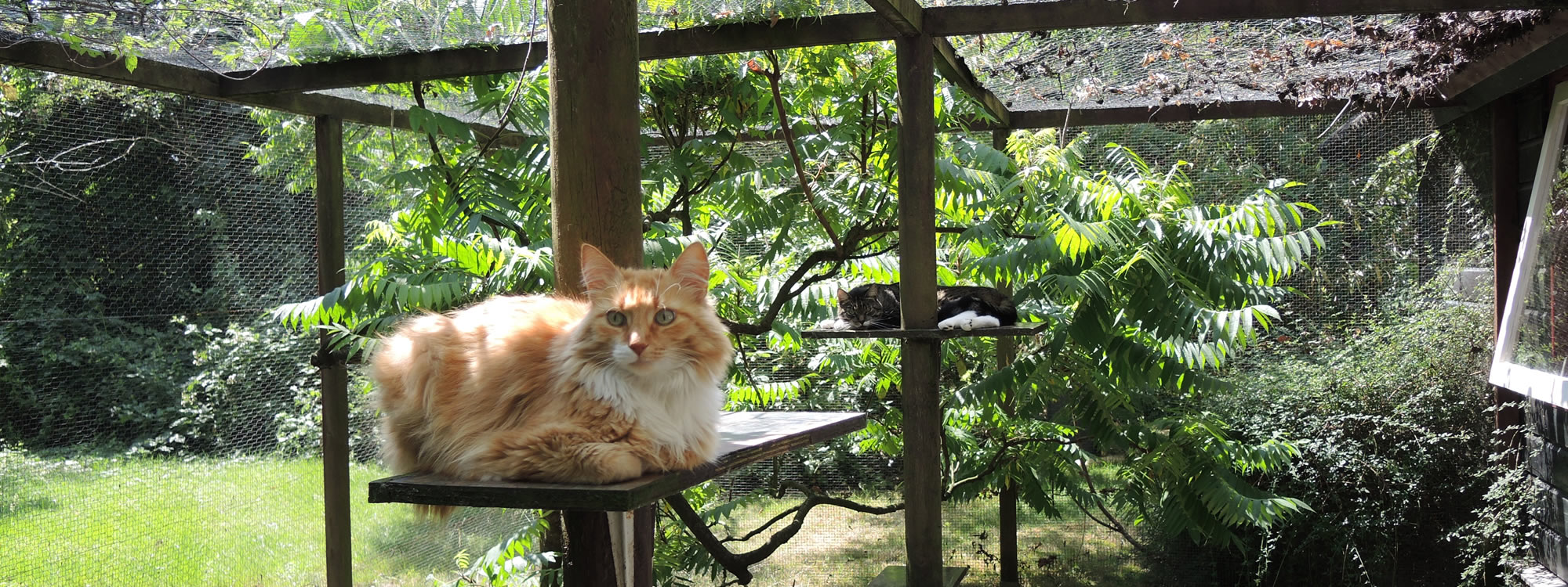 Rode kat buiten in pension voor katten